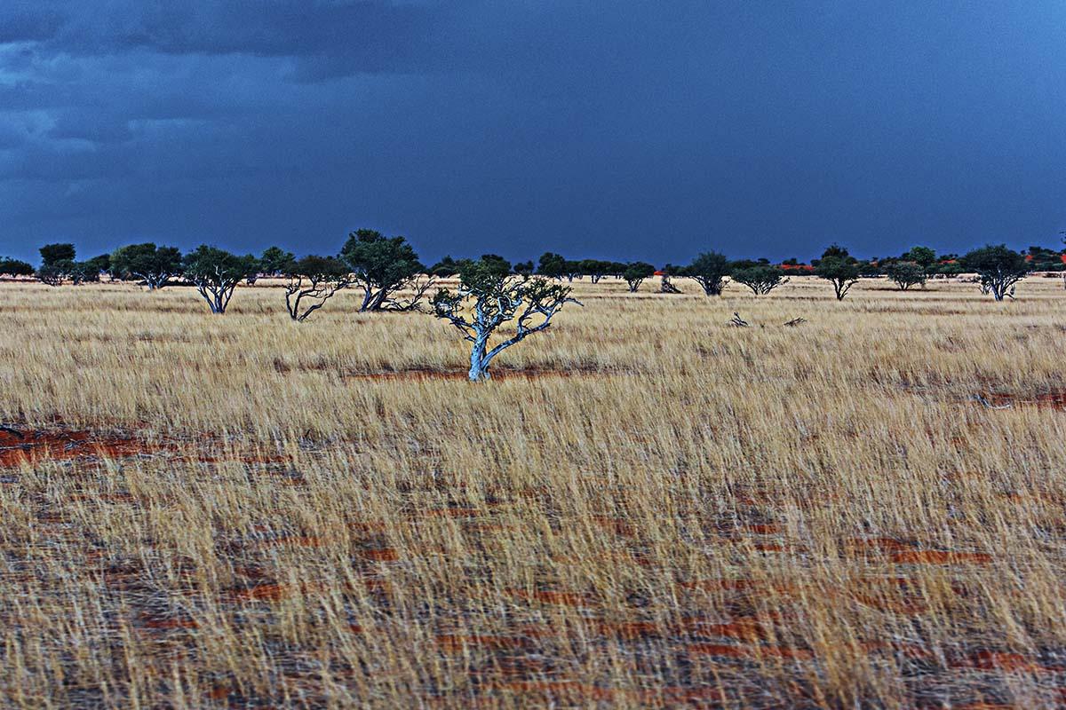 Gewitterstimmung über der Kalahari