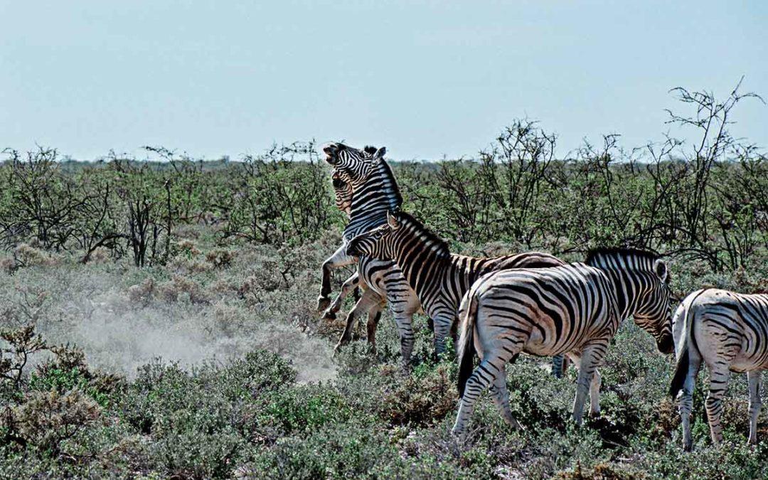 Namibia Rundreise – Reisebericht Teil 3