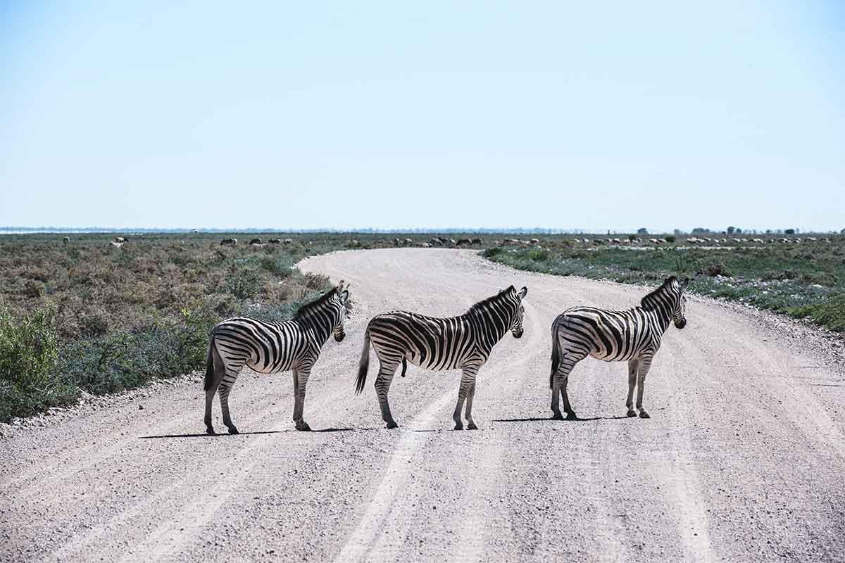 Zebras in der Ethosha-Pfanne